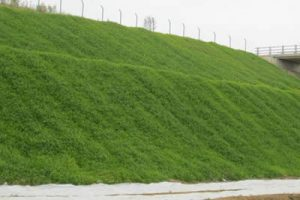 После укладки габионов для озеленения