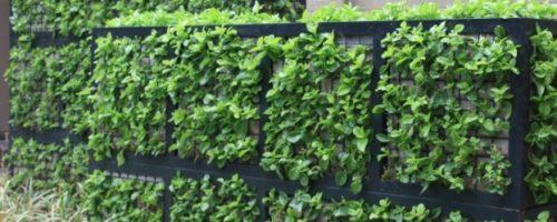 Зелени габиони за двора и градината