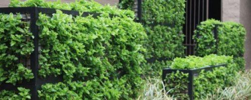 Системи за озеленяване с габиони